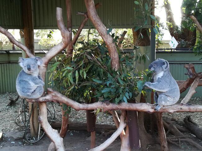 冬のオーストラリアに6泊8日で行ったときのことです。<br />一人旅、すべて個人手配でシドニーとメルボルンを観光してきました。<br /><br />以下、概要です。<br /><br />★JALエコノミークラス体験記<br /><br />★シドニー<br />  シドニーハーバーを一望    ハーバーブリッジ<br />  シドニーのシンボル      オペラハウス<br />  雄大な景色広がる世界遺産   ブルーマウンテンズ国立公園<br />  豪州の固有種がいっぱい    フェザーデールワイルドライフパーク<br /><br />★メルボルン<br />・フリートラムでメルボルン市内観光<br />  世界一美しい図書館      ビクトリア州立図書館<br />  豪州を代表するゴシック建築  セントパトリック大聖堂<br />  舞台版ハリーポッター     プリンセス劇場<br />  ヒュージャックマン凱旋ツアー ロッドレイバーアリーナ
