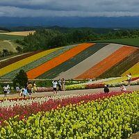 夏旅2019北海道旅行 その2 メインの富良野・美瑛への日帰りバスツアー