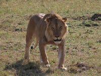 マサイマラ国立公園でBIG5をゲットせよ!