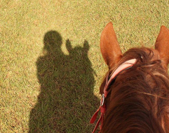 イースター島3日目。<br /><br />前の日にレンタカーで<br />ある程度の観光名所は周れたので<br />この日の午前中は、宿泊しているロッジで主催している<br />乗馬ツアーに参加することにしました。<br />島で一番高い場所に連れて行ってもらうツアーです。<br /><br />馬に乗るのは約5年ぶり。<br />経験の浅い初心者なので<br />ちょっとドキドキしながらのスタートです(^^)<br /><br /><br /><br />