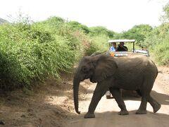 動物を見にルワンダ・タンザニア3 -ルワンダからタンザニア入国 マニャラ湖へ-