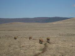 動物を見にルワンダ・タンザニア4 -動物の楽園 ンゴロンゴロ保全地域-