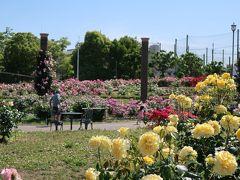 2019 茨木バラ公園 若園公園
