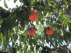 桃を求めて