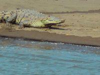 カラ-ラ国立公園のタルコレス川で自然観察