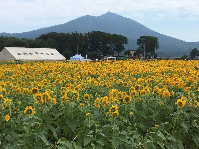 関東鉄道常総線に乗って、茨城県筑西市の「あけのひまわりフェスティバル」に行って来ました。<br />毎年8月下旬から9月上旬に開催され、今年は8月24日から9月1日でした。<br /><br />筑波山をバックに、4ヘクタール超えの広いひまわり畑に、100万本の八重ひまわりが見られて大満足でした。<br />最終日に行きましたが、まだまだ見頃の咲き具合で、とてもキレイな八重ひまわりでした。<br />