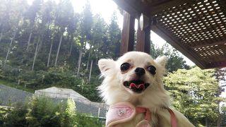 ペットと行く豊田香恋の里五平餅日帰り旅