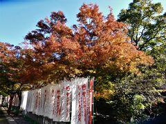 2018年11月 山口県・長門市 大寧寺 ちょっと紅葉をした境内散歩