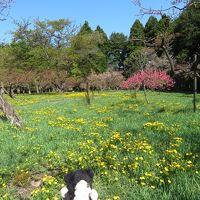 花いっぱいの札幌で散歩