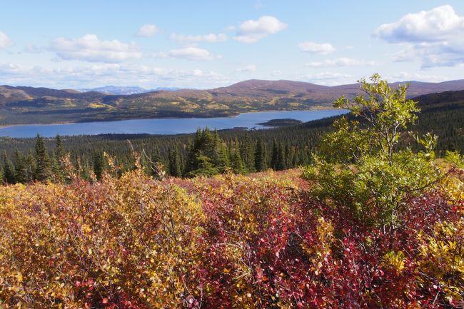 秋のホワイトホースで、オーロラと紅葉を満喫しました。<br />ホワイトホース郊外のイン・オン・ザ・レイクで5泊し、4日目は、フィッシュ・レイクそばのトレイル(片道3km、標高差280m)をハイキングしました。<br />