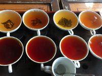 2度目のスリランカ ペラヘラ祭りと紅茶園とコロンボ+ちょっとクアラルンプール �