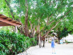 ブルーウォーターマリバゴ泊 島ホッピンとターシャとセスナの夏旅!
