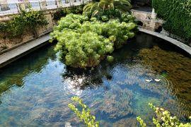 魅惑のシチリア×プーリア♪ Vol.430 ☆シラクーザ:涼しげなパピルスのある美しい泉Fonte Aretusa♪