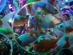 金魚の涼アートアクアリウム2019