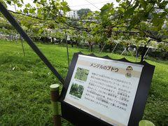 樹名板を探す旅 横浜市こども植物園