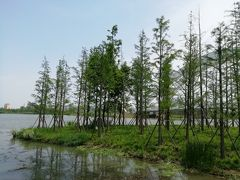 尾瀬のような湿地帯の木径は、途中でペンキが足りなくなったのか、派手な色に塗装されていた2019年6月中国 揚州・鎮江7泊8日(個人旅行)93