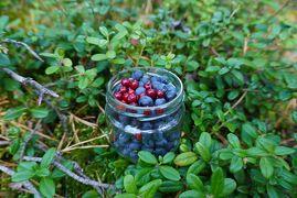 7歳と2歳の子連れフィンランド旅行 4日目 ヌークシオ国立公園