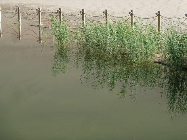 月牙泉に来ました。<br /><br />月牙泉は中国甘粛省敦煌郊外の南5kmにある砂漠中のオアシスで、年月を経て三日月型の池に加工されて、背後の鳴沙山と共に有名な観光地になっている。 月牙泉という名称は清朝時代に使われだした。「月牙」は中国語で「三日月」という意味である。(WIKI)
