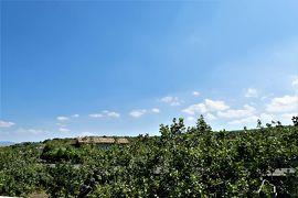 魅惑のシチリア×プーリア♪ Vol.468 ☆ブロンテ:世界最高級のピスタチオとエトナ山♪