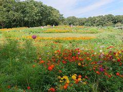 秋の花が咲き乱れるさとやまガーデンフェスタ2019秋と四季の森公園散策