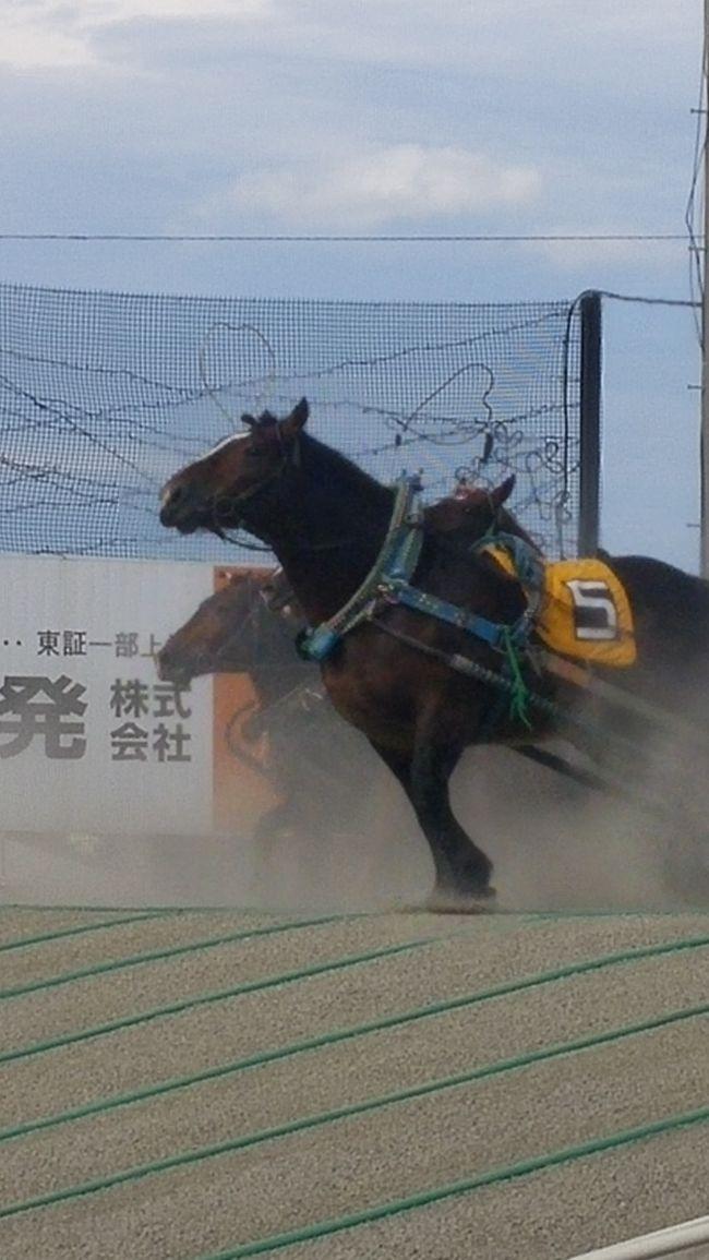 大好き北海道! 帯広、釧路 3日目 真鍋庭園とばんえい競馬