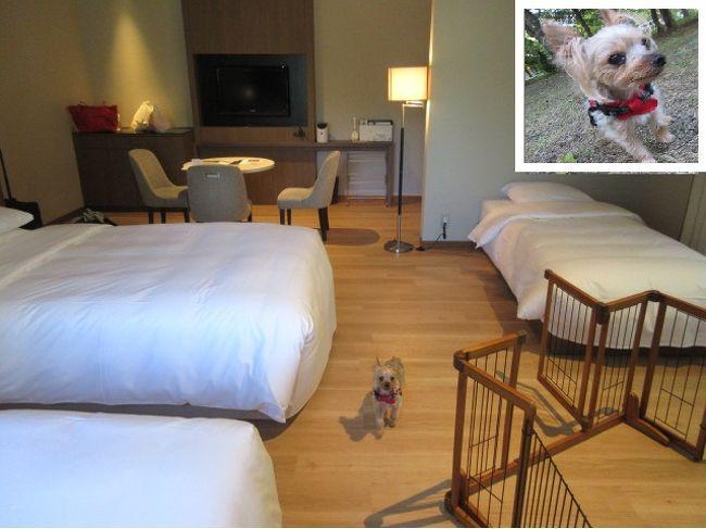 9月の連休に犬連れ軽井沢を計画。<br />軽井沢で2泊しようとホテル泊まり替えを調べてたら、白馬のマリオット(コートヤード)に、ドッグルームがある!!<br /><br />白馬まで東京から車で行けるかな?家族が遠すぎると言う。コートヤード白馬に電話で聞いたら、軽井沢から車で3時間だって。<br />連休だと車が混んでたどり着けないかもしれない、ので、前倒しに連休の前日泊にしました。先に白馬泊、後に軽井沢泊にして。軽井沢マリオットは中心から外れた追分に近い立地なので、長野からの渋滞の休日移動に好都合。<br /><br />白馬は一時の衰退から蘇って外国人客が増えている、といっても寂しい観光地で雑草一杯、自然一杯でした。白馬岩岳マウンテンリゾートと白馬ジャンプ台を見られて満足。夏の白馬ってって大雪渓だけでなく、楽しめます。<br />超勝ち組の化け物みたいな巨大な観光地商業地と化した軽井沢は渋滞、渋滞ですが、お買い物天国、西武は強いわ。星のもね。<br /><br />どちらのマリオットのドッグルームも部屋が清潔で温泉付き、犬のにおいがしなくて、我が家の過保護の極小ヨーキーが喜んで泣かずに、部屋でお留守番、できました。犬専用の宿より、一般客が泊まるホテルのドッグルームがいいなあ。ホテル内、ホテル周辺でお散歩できて、笑顔一杯のワンコを見て、私も幸せ。<br /><br />画像は軽井沢マリオットのドッグコテージです。<br /><br /><br />