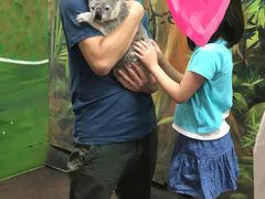 子連れ(6歳)でGo~ゴールドコーストでコアラを抱っこ