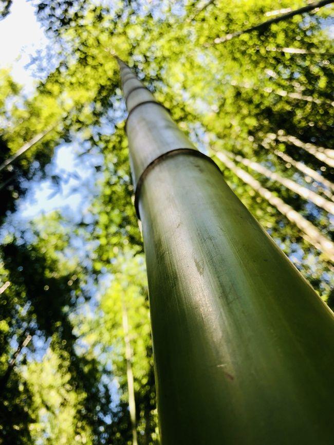 京都嵐山へ日帰りで行ってきました!<br />ブラブラと食べ歩きをしたり、トロッコ列車に乗るなどをして楽しみました!
