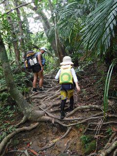 夏旅1 自然いっぱい西表島!ピナイサーラの滝へカヌー&トレッキング