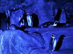 静岡レッサーパンダとグルメは赤ちゃんにも会えたラッキー続き(3)昼と夜の日本平動物園:いろんな動物の昼と夜&オートチェアに乗って夜景も満喫