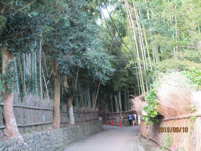 京都で1泊し、朝の涼しい時間に嵐山、嵯峨野を散策しました。もう少し、いろいろなところに行きたかったのですが、あまりの暑さにあきらめました。