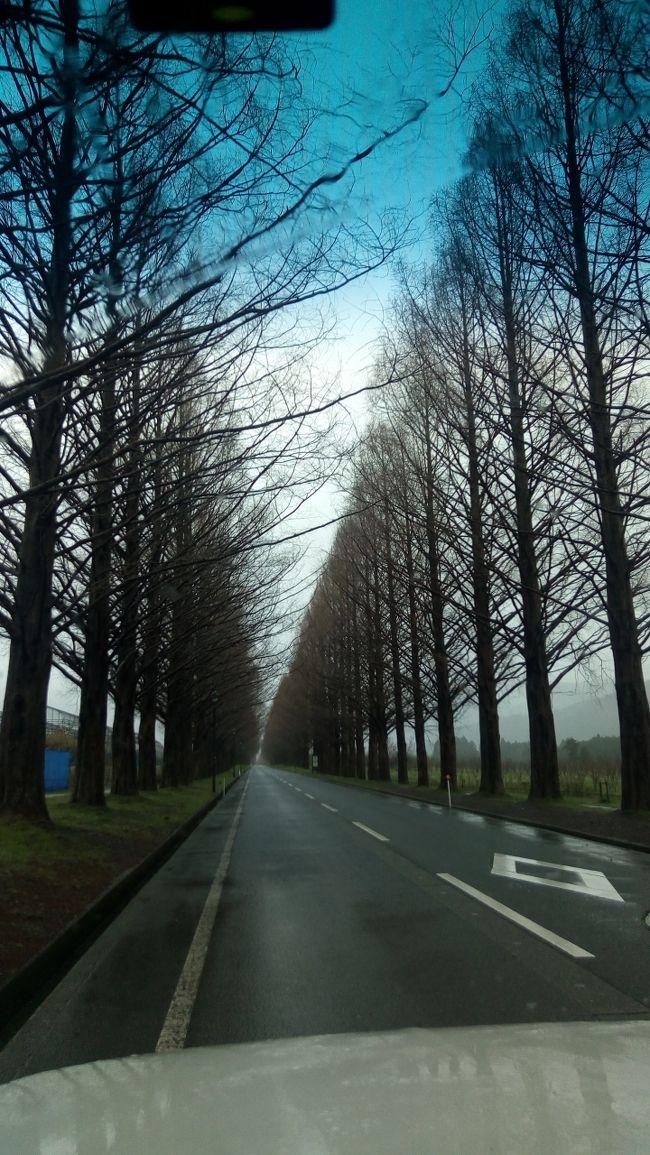 桜の季節も終わったころに、マキノと彦根に
