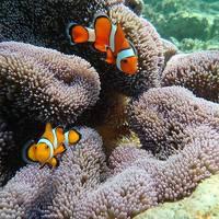 沖縄3泊4日(2)シェラトン沖縄サンマリーナリゾート