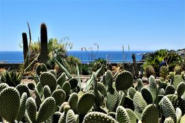 魅惑のシチリア×プーリア♪ Vol.548 ☆Aci Castello:黒いアーチ城 美しいサボテン庭園♪
