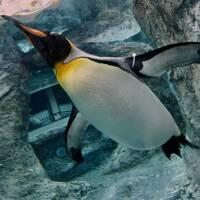 オジサンになってから、やっと来れた、あの「旭川」にある『旭山・動物園』(空とぶペンギン編/旭川市/北海道)#5