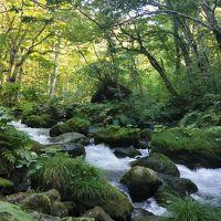 星野リゾート目当ての奥入瀬渓流で苔三昧。
