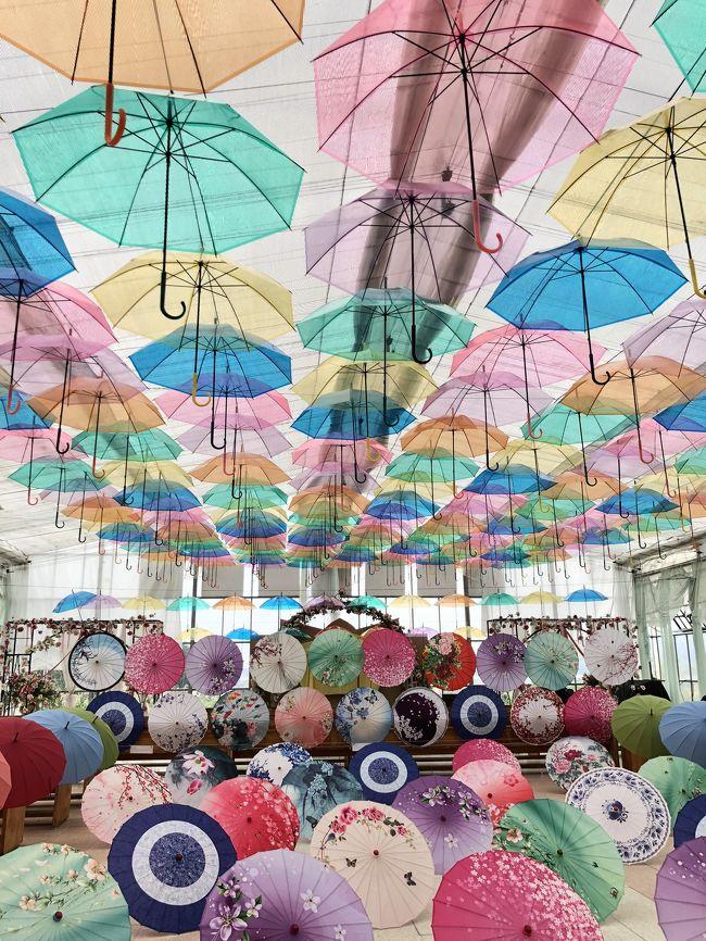 会津藩公行列を見るために安さと近さで選んだリステル猪苗代<br /><br />花畑、傘の花、花火<br /><br />3つの花を楽しめる場所でした<br /><br /><br />翌日はお天気に恵まれ会津藩公行列をじっくり見物<br /><br />会津でまた綾瀬はるかちゃんに会えました