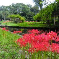 彼岸花咲く小石川後楽園と周辺散歩