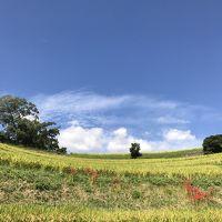 千早赤坂村でのんびり過ごす午後