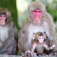 中津からあげに豊後サバ。高崎山ではボス猿に挨拶!