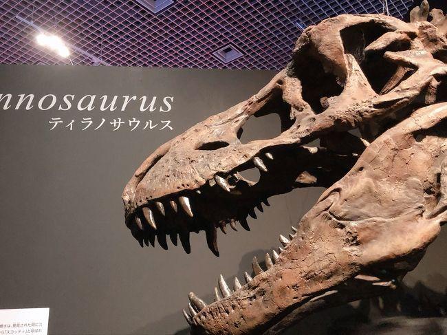 来週行く予定の、北海道むかわ町<br /><br />そこには「むかわ竜」という化石があるらしい<br /><br />穂別博物館のHPを見てみたが<br />展示されている風もなく<br />リニューアル計画もあるようで<br /><br />時間があれば行ってみるかな<br />くらいに思ってました<br /><br />先日、美容室で雑誌をパラパラ見ていたら<br />「恐竜博2019」の記事があり<br /><br />日本の恐竜史上、最大の発見!<br />むかわ竜!世界初公開!<br /><br />そこにおったんか!<br /><br />という事で<br />急遽、上野の国立科学博物館に行って参りました~<br />