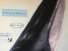 8日間駆け足 四国旅④:黒潮町でドルフィンウオッチング(本当は鯨に会いに来たのだけどね)