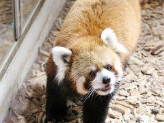 茶臼山動物園