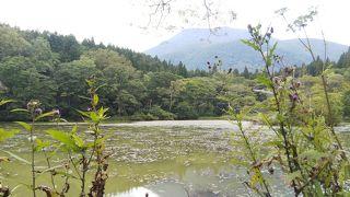 上越旅行2 御鹿池散策 森林セラピー 一日目続き。