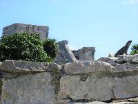 初クルーズでキューバ#9-2019年2月1日(金)イグアナとトゥルム遺跡