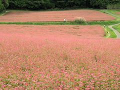 長野南部見どころ満喫の旅(千畳敷カール、木曽福島、赤そば畑)