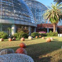 東京オリンピックのアーチェリー会場前に夢の島熱帯植物館