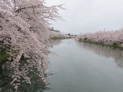 2018春、東北北部の名城巡り(12/28):4月25日(7):弘前城(4):西濠、桜のトンネル、埋門跡、カルガモ