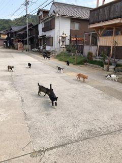 瀬戸内海の島めぐり 予定外の島 真鍋島 猫の島