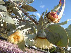 南半球初訪問☆オーストラリアの大自然&もふもふに癒される旅⑥パース到着